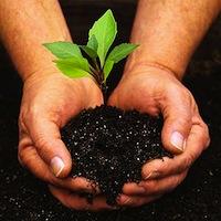 hands-gardening